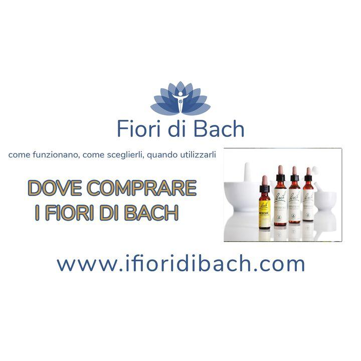 03-Dove-comprare-i-fiori-di-Bach