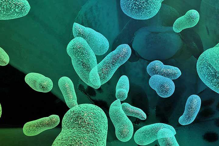 How Do We Name Organisms?