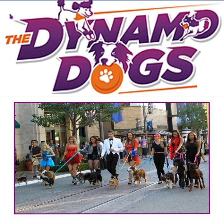 Countyfairgrounds presents Dynamo Dogs