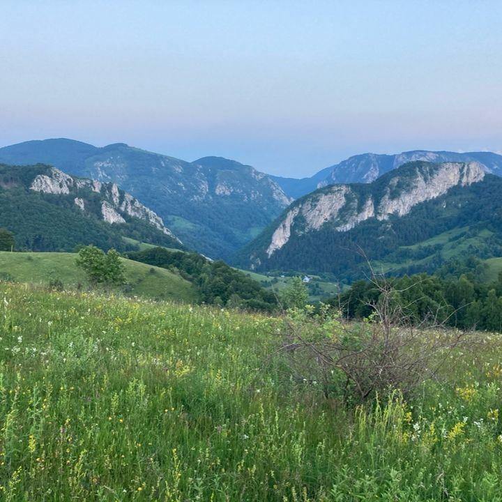Europe Forest Trip Romania Apuseni Mountains- Forestpod