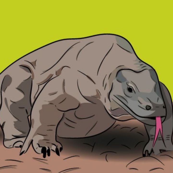 Attenborough e il Drago di Komodo - Ecologia & Zoologia
