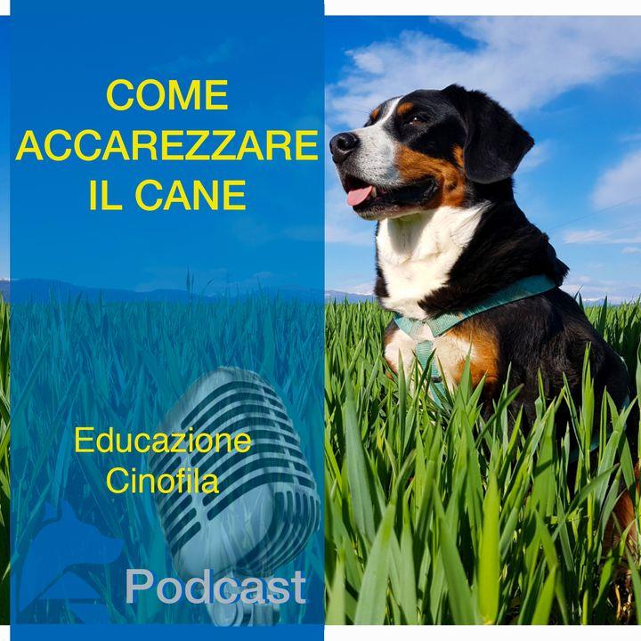 Come Accarezzare il Cane