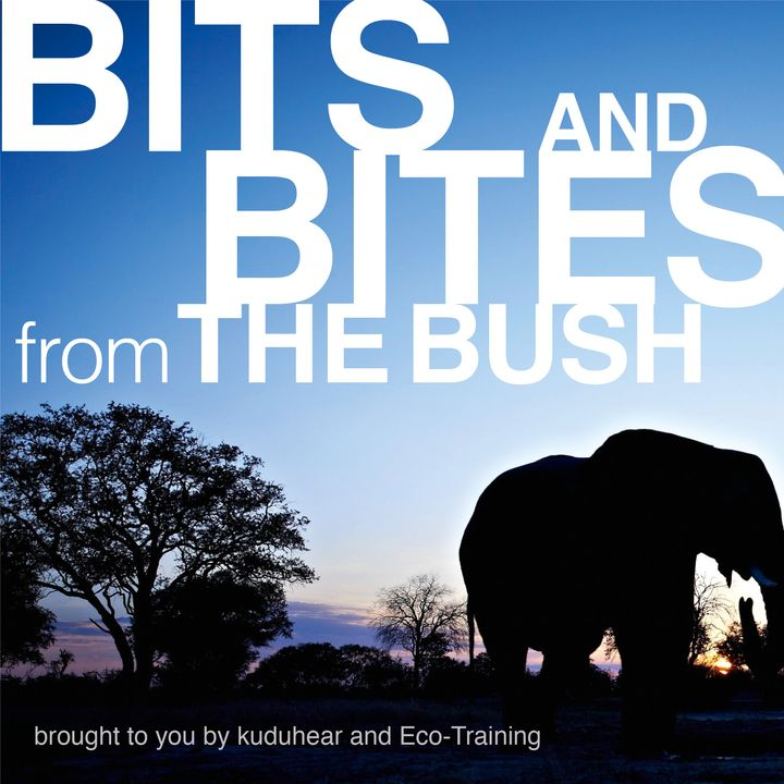 Bits & Bites from the Bush: Wilderness-wise with Eco-Training