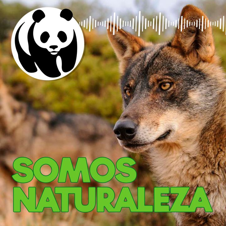 Lobo 🐺 - Ep. 1