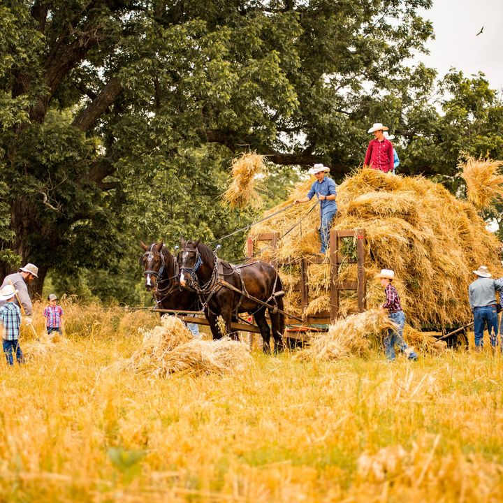 #024 - Jak rolnictwo zmieniło świat? Rewolucja agrarna i jej konsekwencje