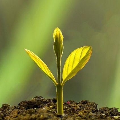 Sostenere le buone pratiche di bioeconomia: il futuro del suolo europeo passa da qui