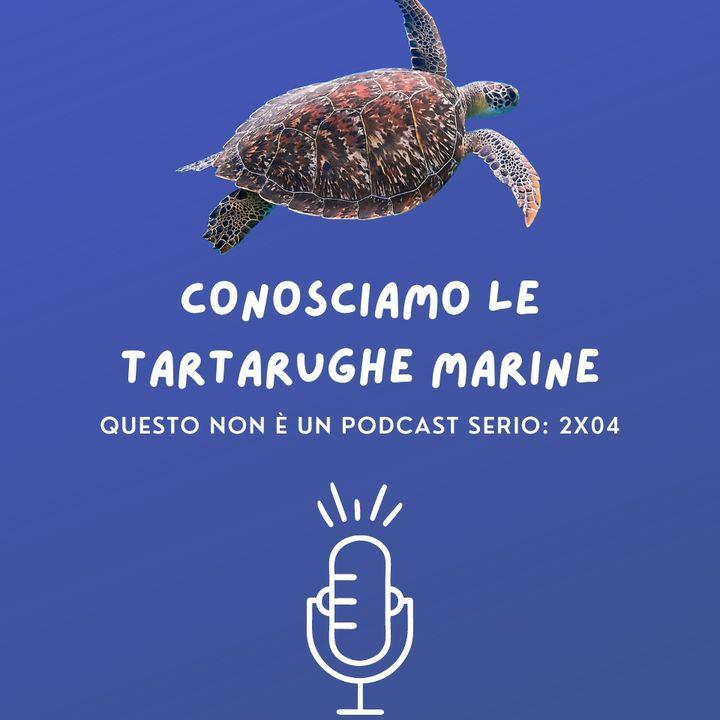 Conosciamo le tartarughe marine: 2x04 🐢