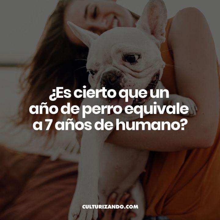 ¿Es cierto que un año de perro equivale a 7 años de humano? • Curiosidades - Culturizando