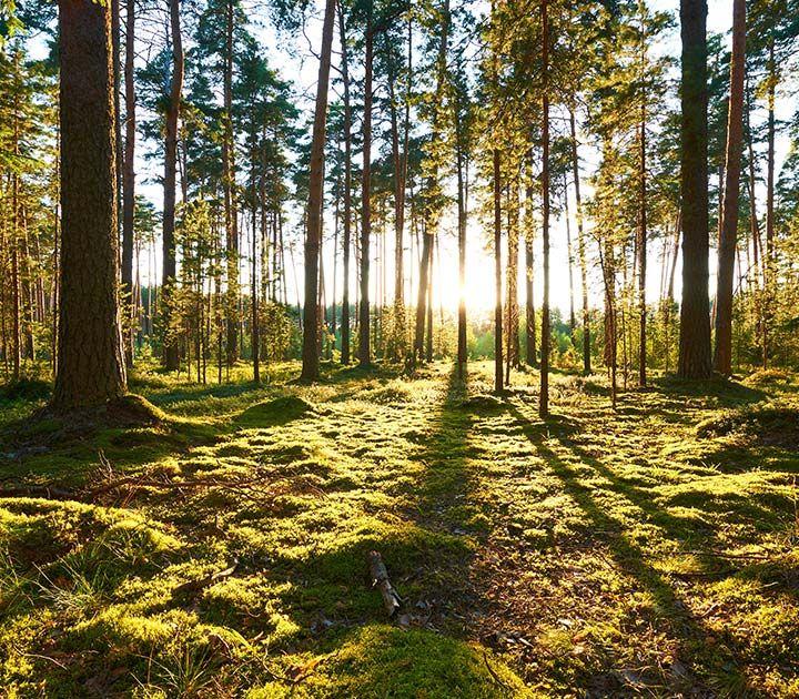 Tutto Qui - lunedì 15 marzo - 3 milioni di euro alle aziende forestali piemontesi