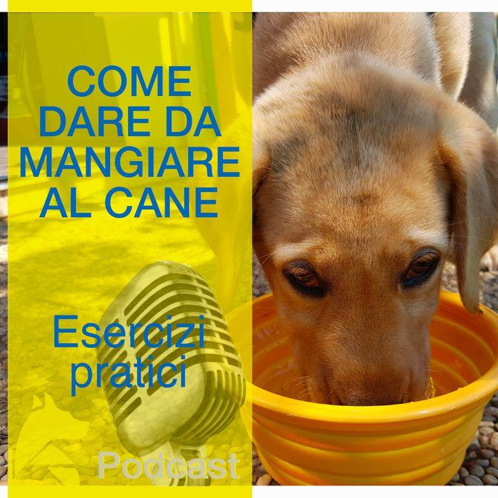 Come Dare da Mangiare al Cane  -Pratica-