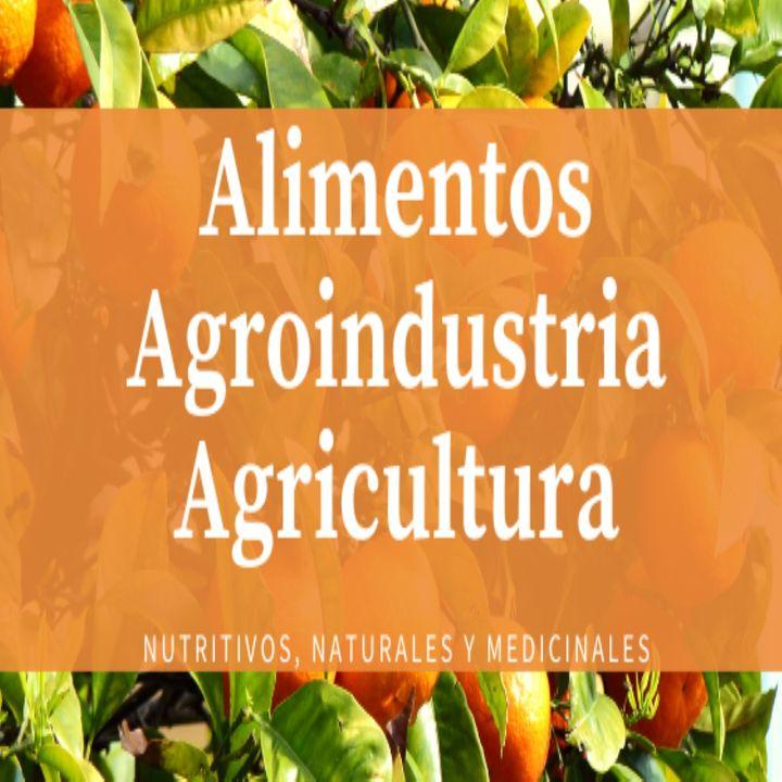 Distintos tipos de agricultura