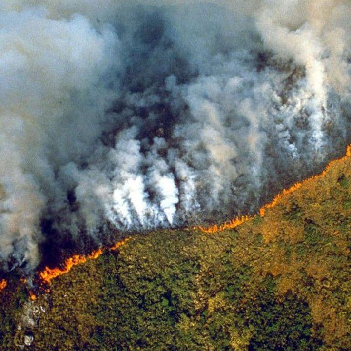 La distruzione dell'Amazzonia ci abitua al male