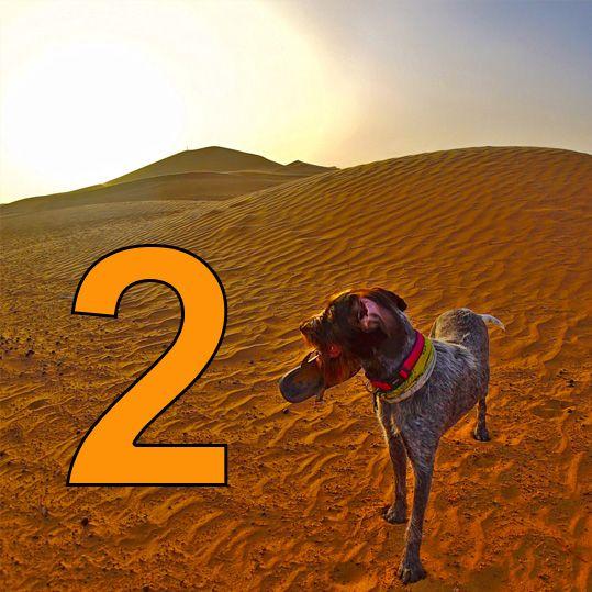 Saharyjskie chłody i upały 1.2