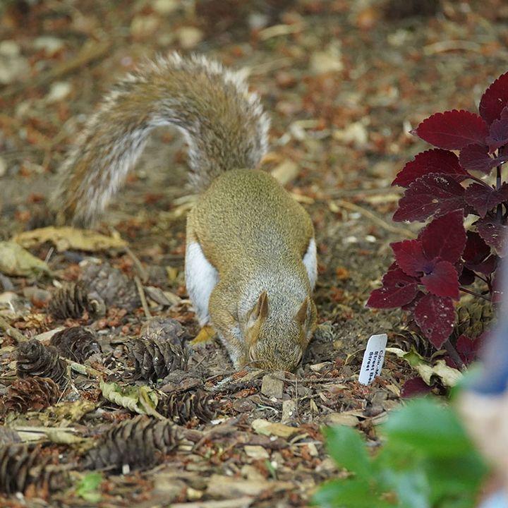 Who Are the Top 5 Garden Critters Eating Your Garden Bulbs? - DIY Garden Minute Ep.163