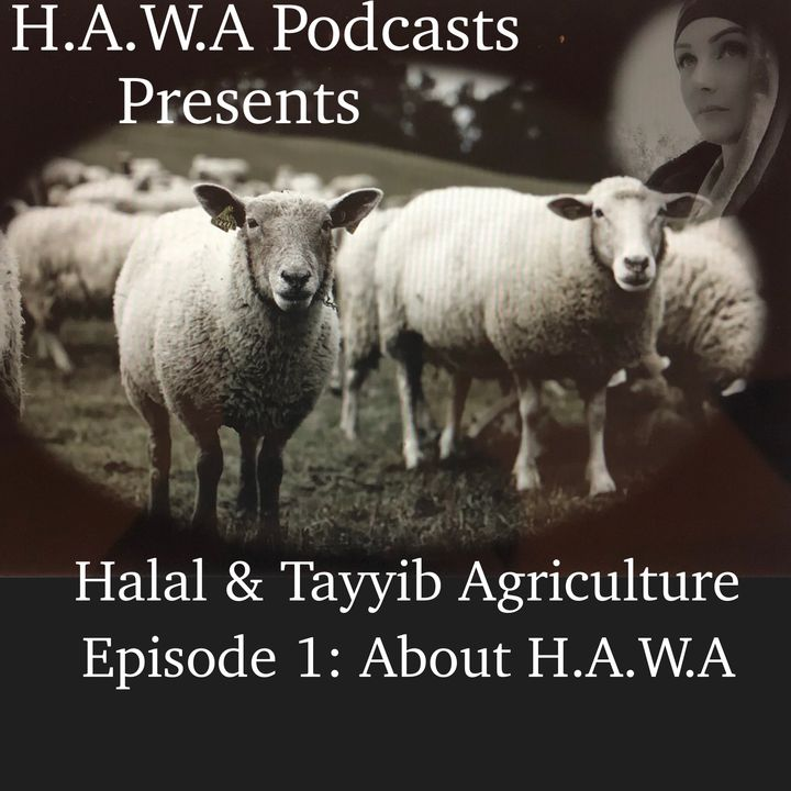 Episode 1: About H.A.W.A