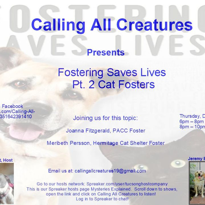 Fostering Saves Lives Pt. 2 - Cat Fosters