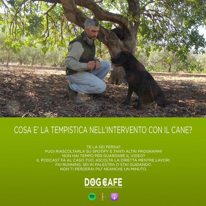 #058 - Cosa è la tempistica nell'intervento con il cane