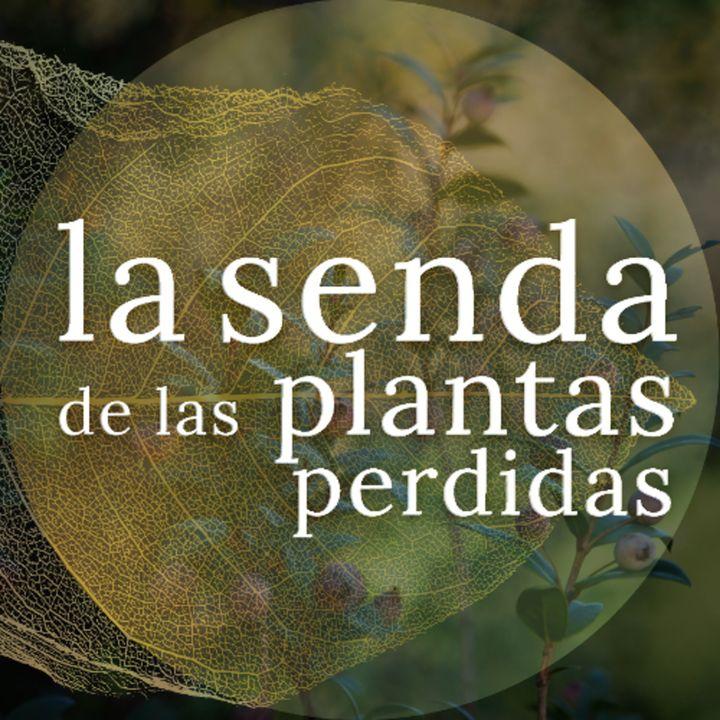 La corona del verdor eterno: Myrtus communis {La Senda de las Plantas Perdidas}