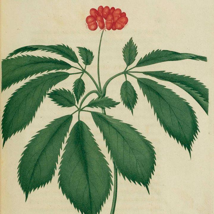 Southern Appalachian Herbs