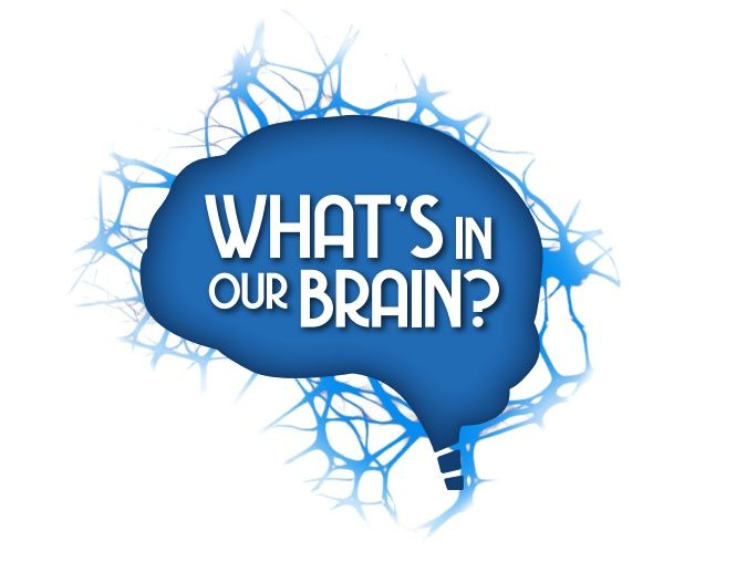 23. What's In Our Brain?