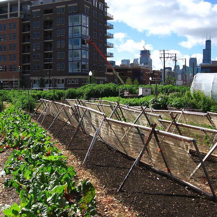 Fa Bene al Clima - Agricoltura Urbana