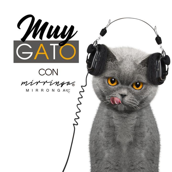 01. Conductas inadecuadas en gatos
