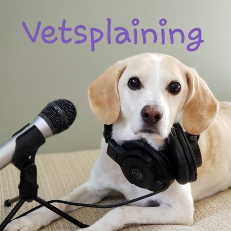 Vetsplaining