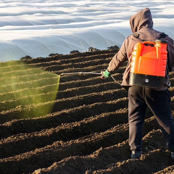 Using glyphosate aka 'Roundup' to kill weeds - Belgium's ban backfires