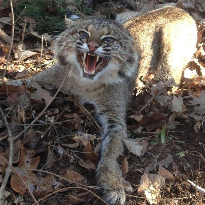 Wildcat Alley (Vol. 2, No. 2) - 8-28-14