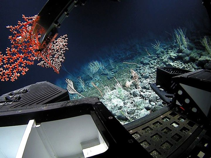Science Seen through Art: Deep-Sea Colors
