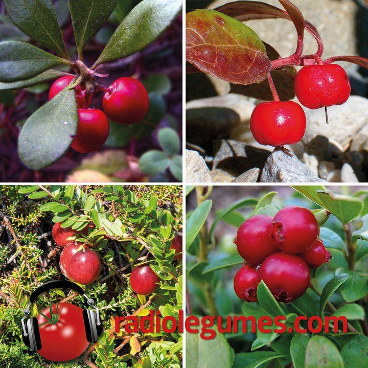 5 petits fruits bien de chez nous
