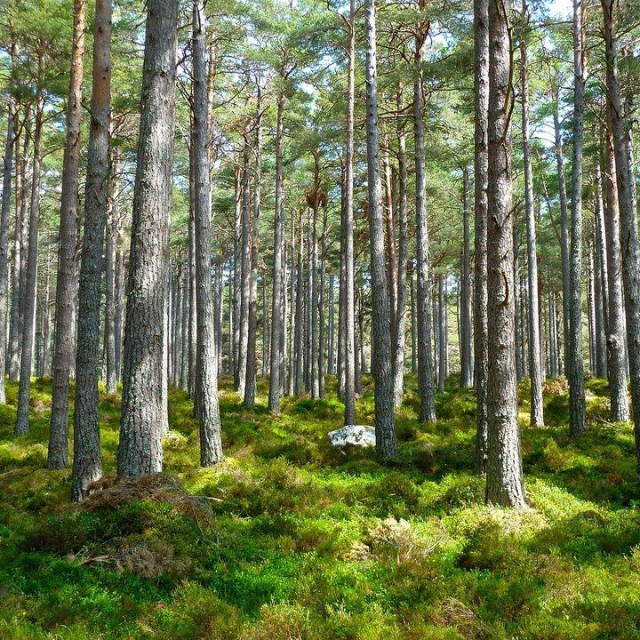 Plantar un billón de árboles para luchar contra el Cambio Climático, con Victor Resco   Actualidad y Empleo Ambiental #44