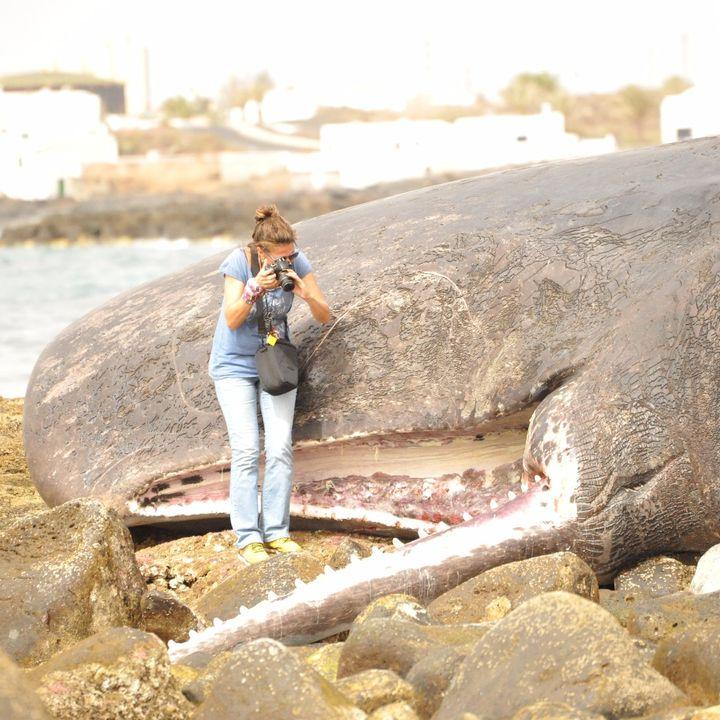 Asistiendo a un varamiento de cetáceos | Planeta Agua #13