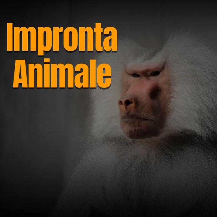 Il Mercato Nero degli Animali Domestici - Pourparler
