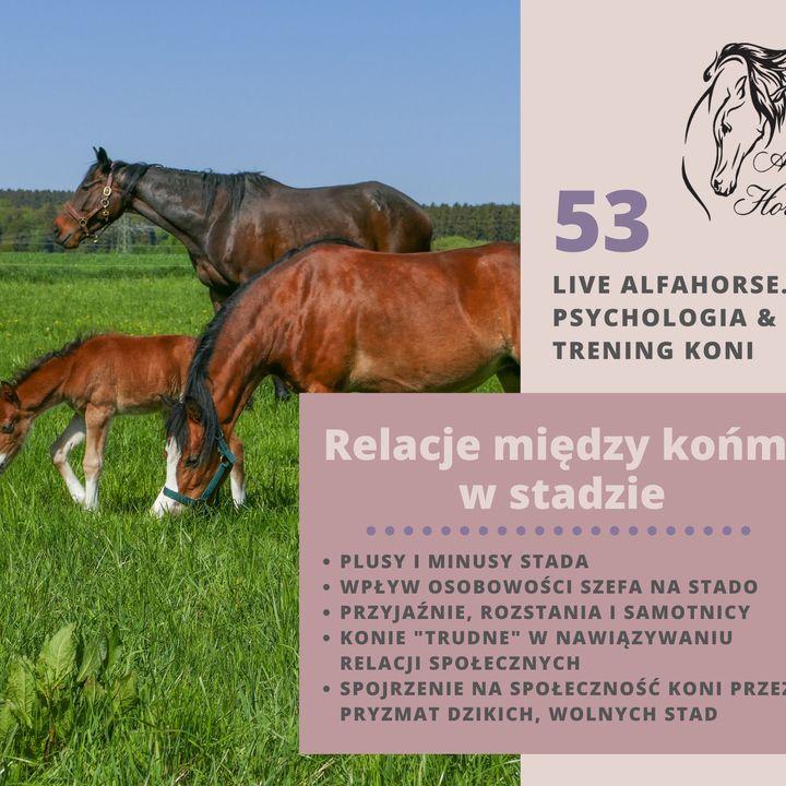 Live 53: Relacje między końmi w stadzie