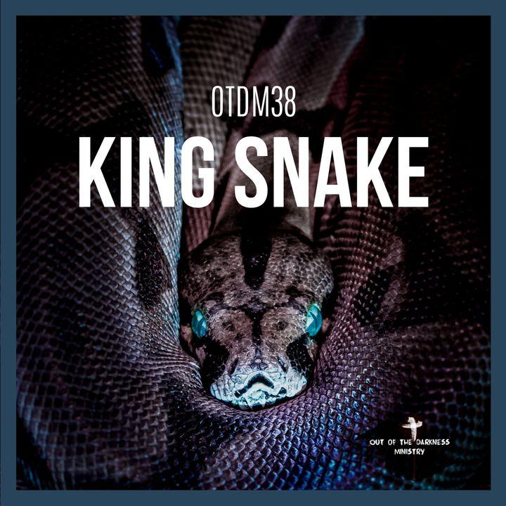 OTDM38 King Snake