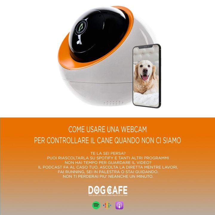 #054 - Come usare una webcam per controllare il cane quando non ci siamo