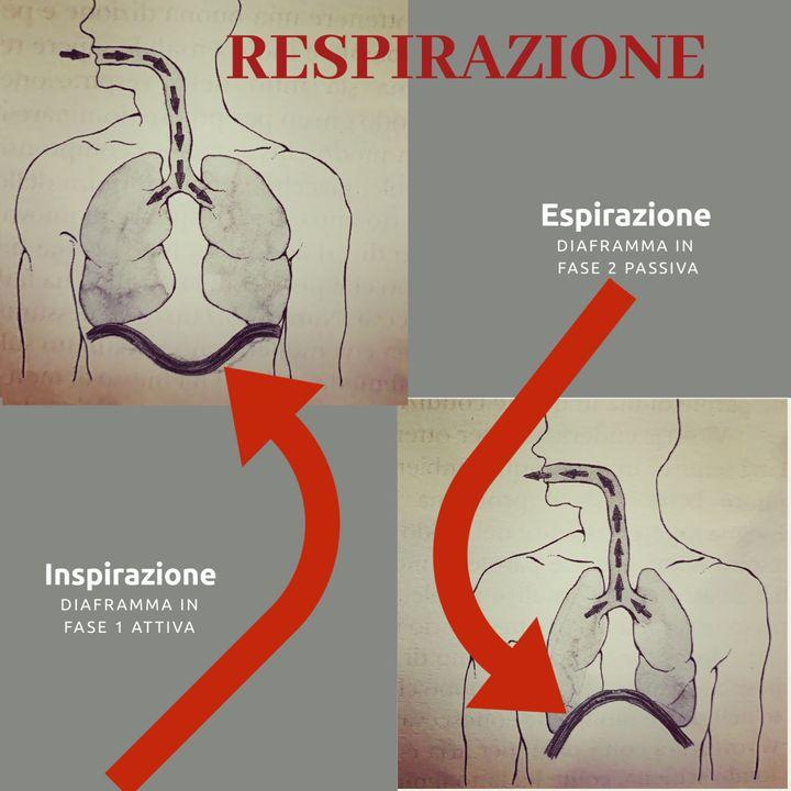 2. Dizione per tutti- respirazione 29-2-2020