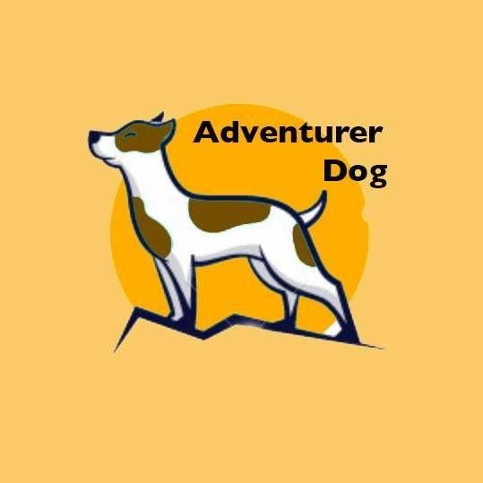 Adventurer Dog - psie wyprawy SAHARA