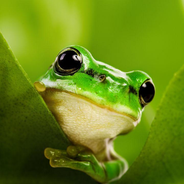 White Noise Baby Sleep | Peaceful Frog Singing Night | Colicky Baby Sleeps | ASMR sounds for deep Sleep | Relax | Study | Work