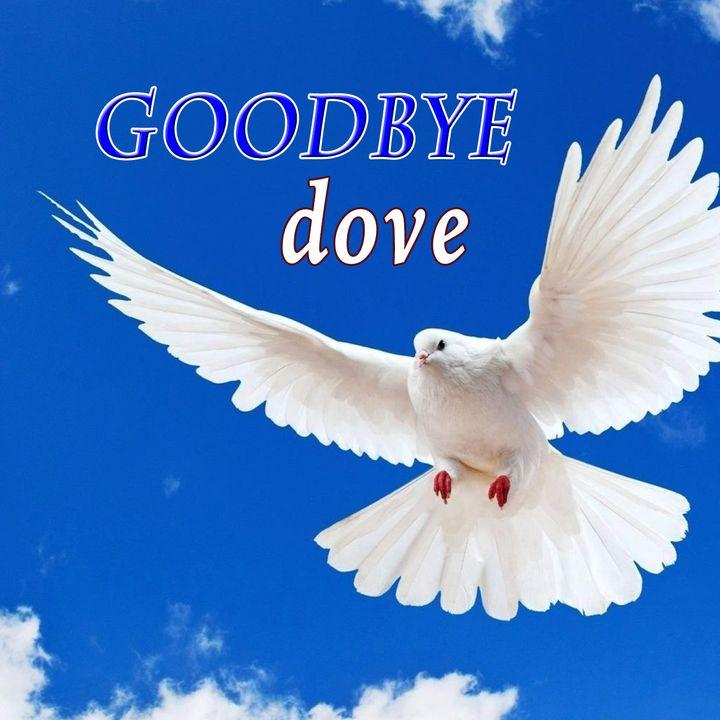 Goodbye Dove, Genesis 8:10-13