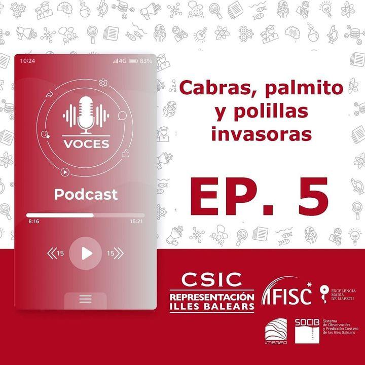 Cabras, palmito y polillas invasoras   Voces, CSIC Balears #05