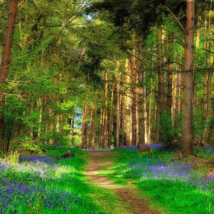 Il sentiero nel bosco. Legge  Michele