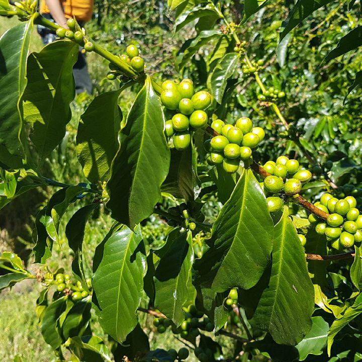 Coffee Origin Trips Podcast