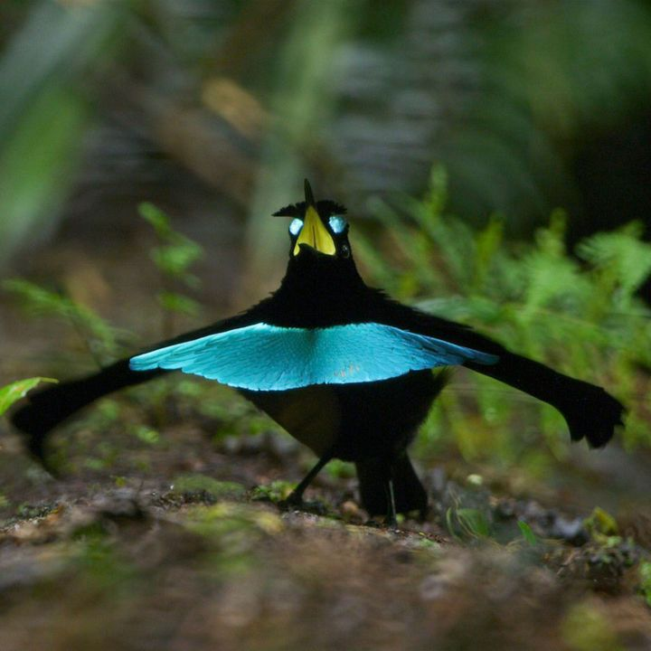 Black Bird  Swinging in the Spread of Light