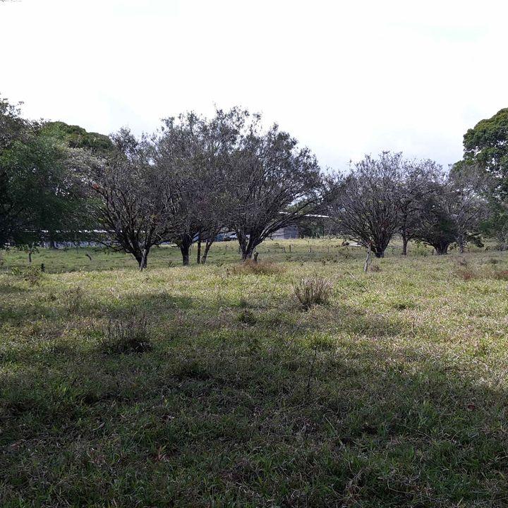 Ecosistema Pastizal