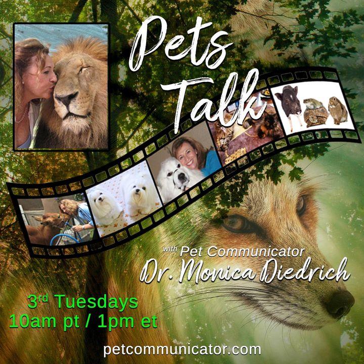 Pets Talk: with Pet Communicator Dr. Monica Diedrich