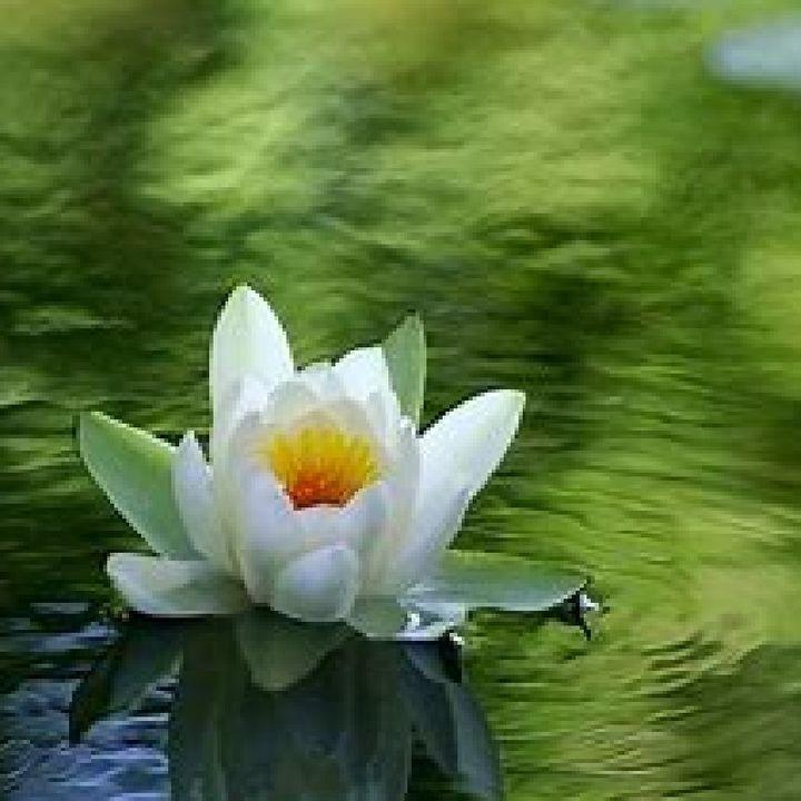 Episode 58 - Restore & Release Meditation