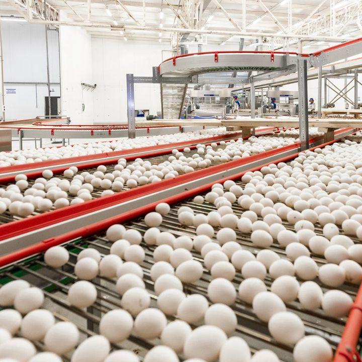 #ANBA 22 – Como os ovos do Brasil chegam aos países árabes