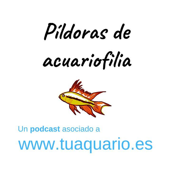 Pildoras de acuariofilia 3. Acuariofilia Responsable España (conversación)